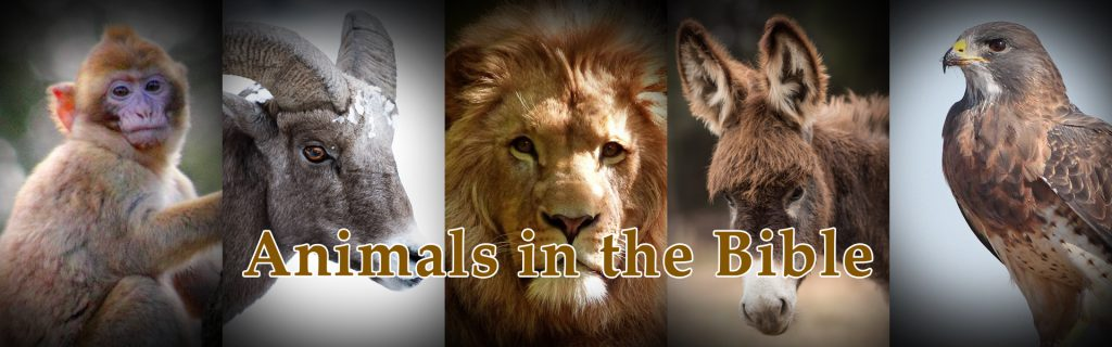Animals in the Bible Quest with images of a donkey, goat, lion, and bird